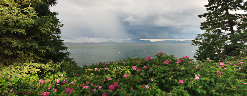 Sea and roses with a storm in the background